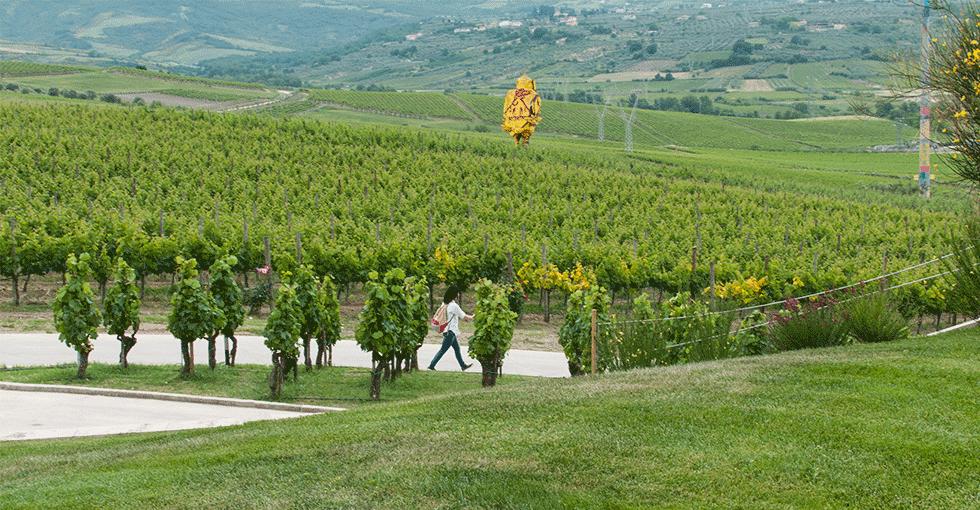 vinmarker med stor kunstnerisk kylling midt i vinåkeren