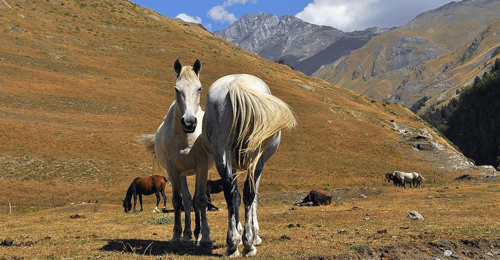 hester i fjellene