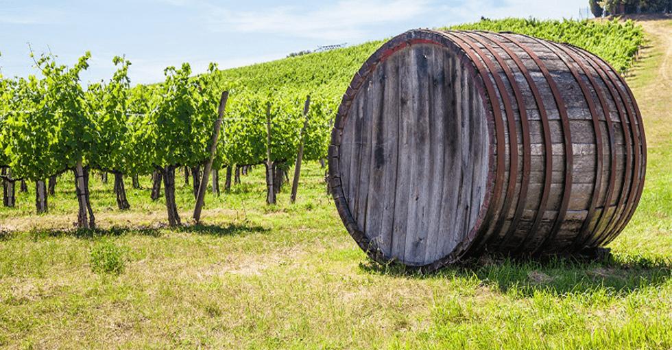 vinranker og vintønne