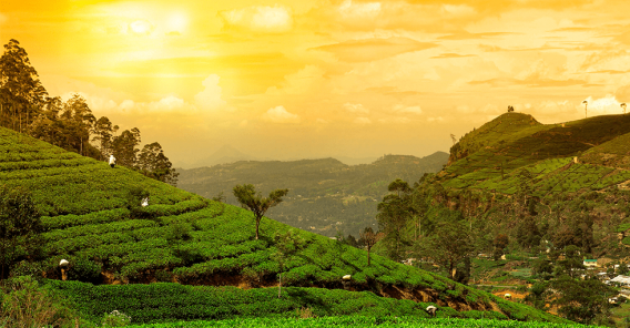 Sri Lanka i gul kveldshimmel
