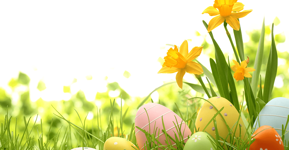 påskeliljer og påskeegg