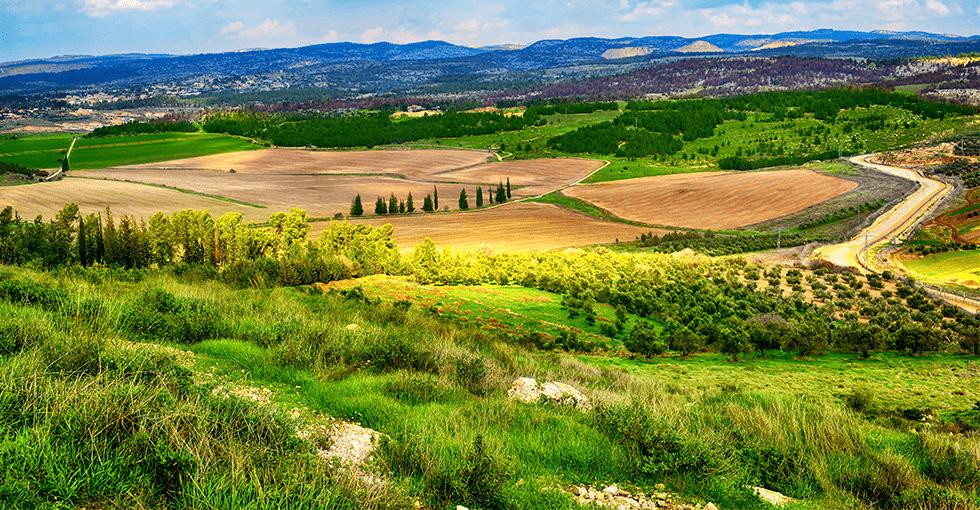grønne, frodige åkrer på landet