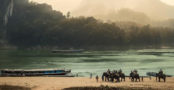 elefanter ved stranden