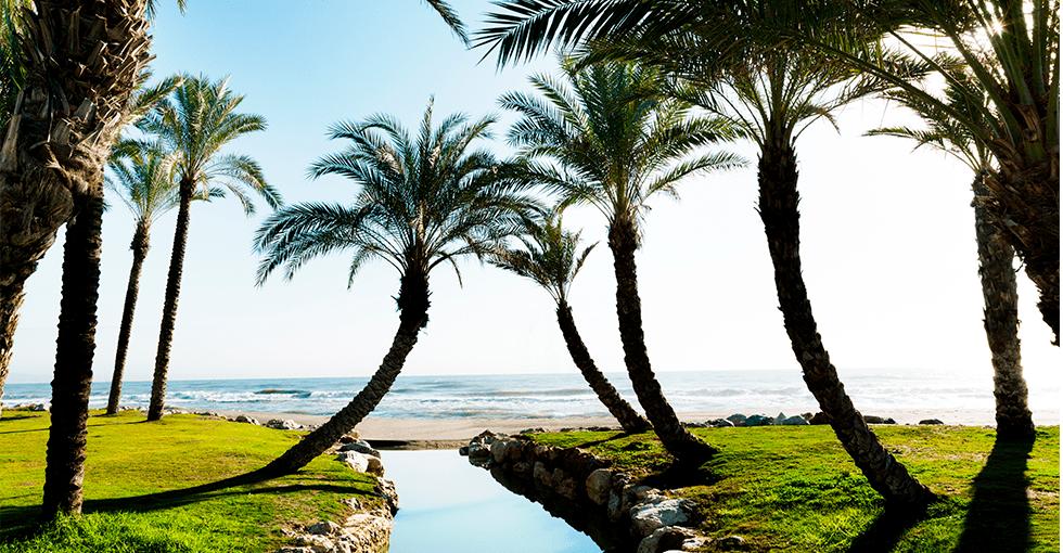 bekk ved stranden i skyggen av palmer