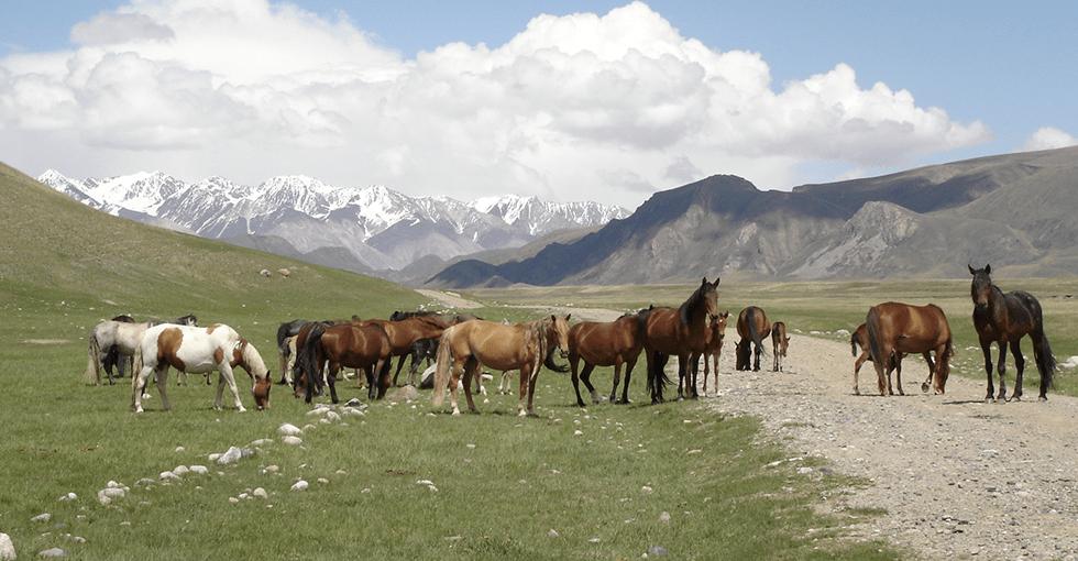 hester på stepper